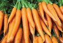 Did You Know?. Carrots Can Give You A Beautiful Skin!